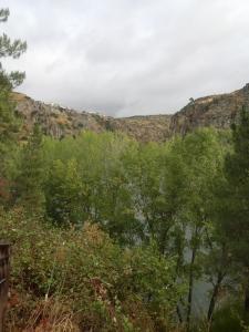 Vista a través de los árboles de las rocas del cañón del Duero. LeleSorribas2013